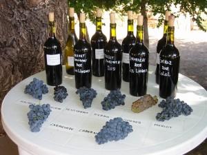 Colchagua wine