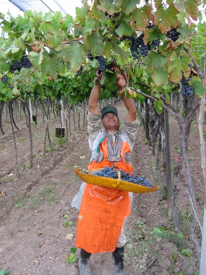Harvest Mendoza Argentina