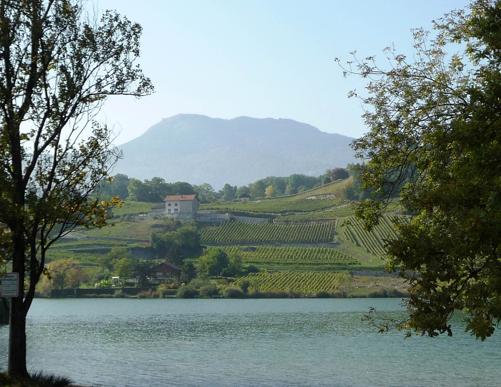 Savoie vineyards by lake